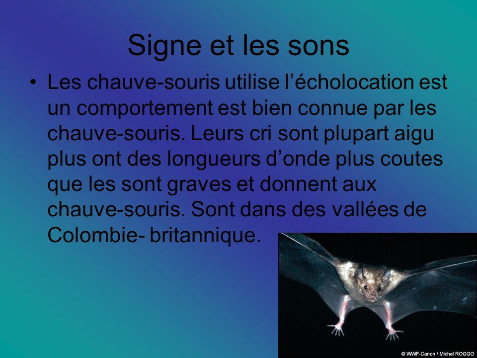 Signe et les sons Les chauve-souris utilise lécholocation est un comportement est bien connue par les chauve-souris.