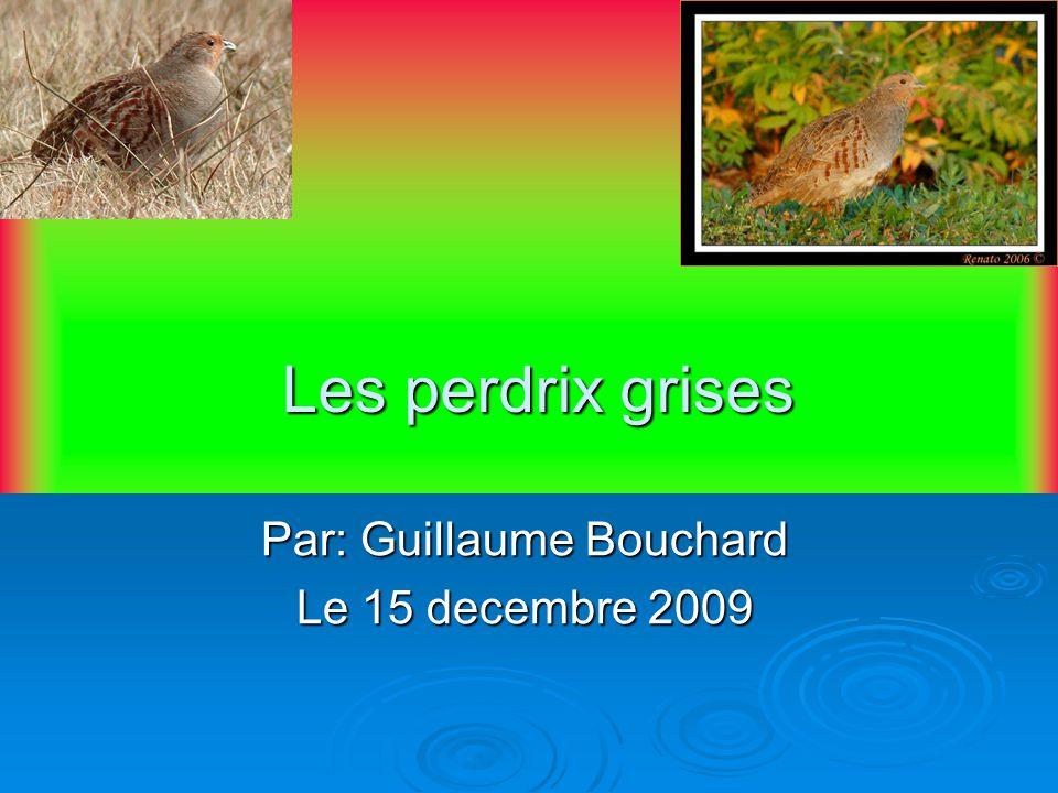 Les perdrix grises Par: Guillaume Bouchard Le 15 decembre 2009