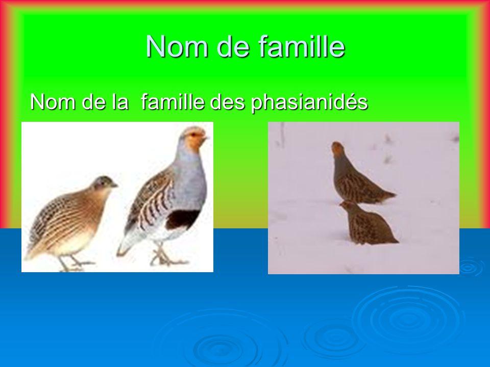 Nom de famille Nom de la famille des phasianidés