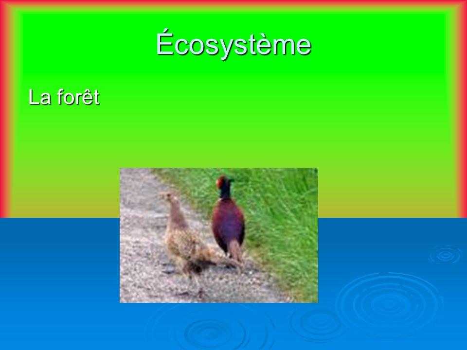 communauté Les oiseaux, les plantes, les animaux qui vivent dans la forêt.