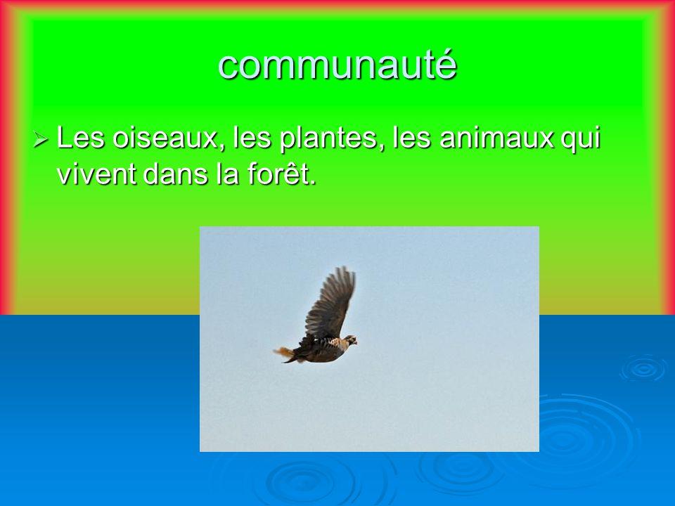 communauté Les oiseaux, les plantes, les animaux qui vivent dans la forêt. Les oiseaux, les plantes, les animaux qui vivent dans la forêt.