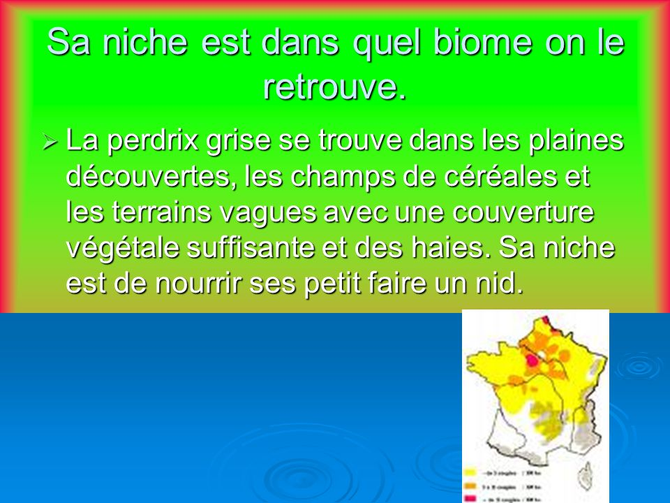 Sa niche est dans quel biome on le retrouve. La perdrix grise se trouve dans les plaines découvertes, les champs de céréales et les terrains vagues av
