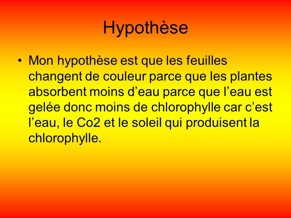 Hypothèse Mon hypothèse est que les feuilles changent de couleur parce que les plantes absorbent moins deau parce que leau est gelée donc moins de chl