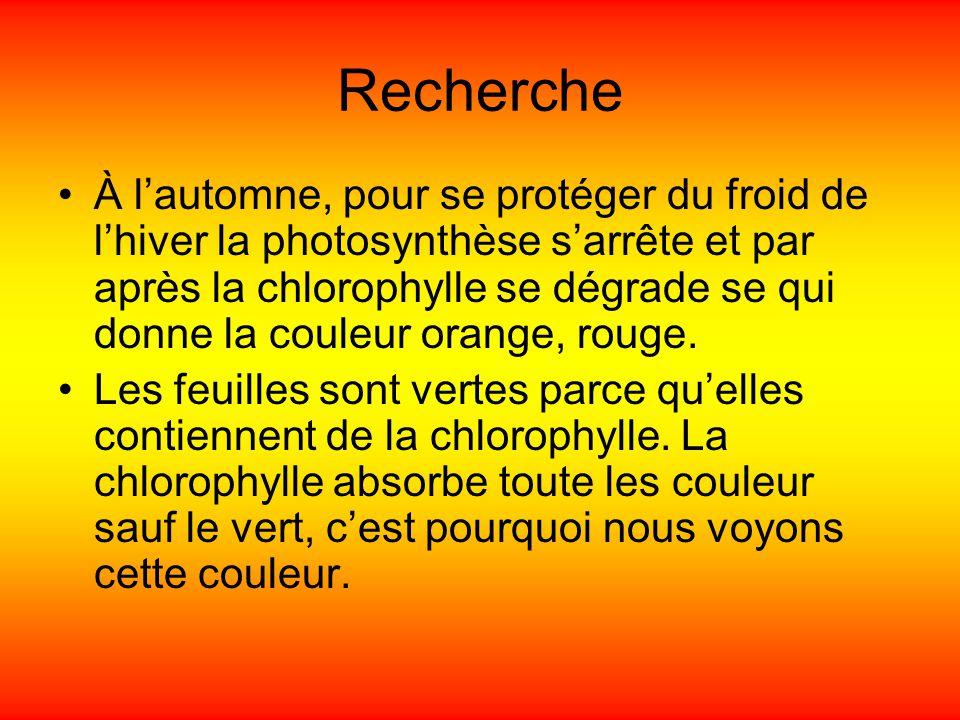 Recherche À lautomne, pour se protéger du froid de lhiver la photosynthèse sarrête et par après la chlorophylle se dégrade se qui donne la couleur ora
