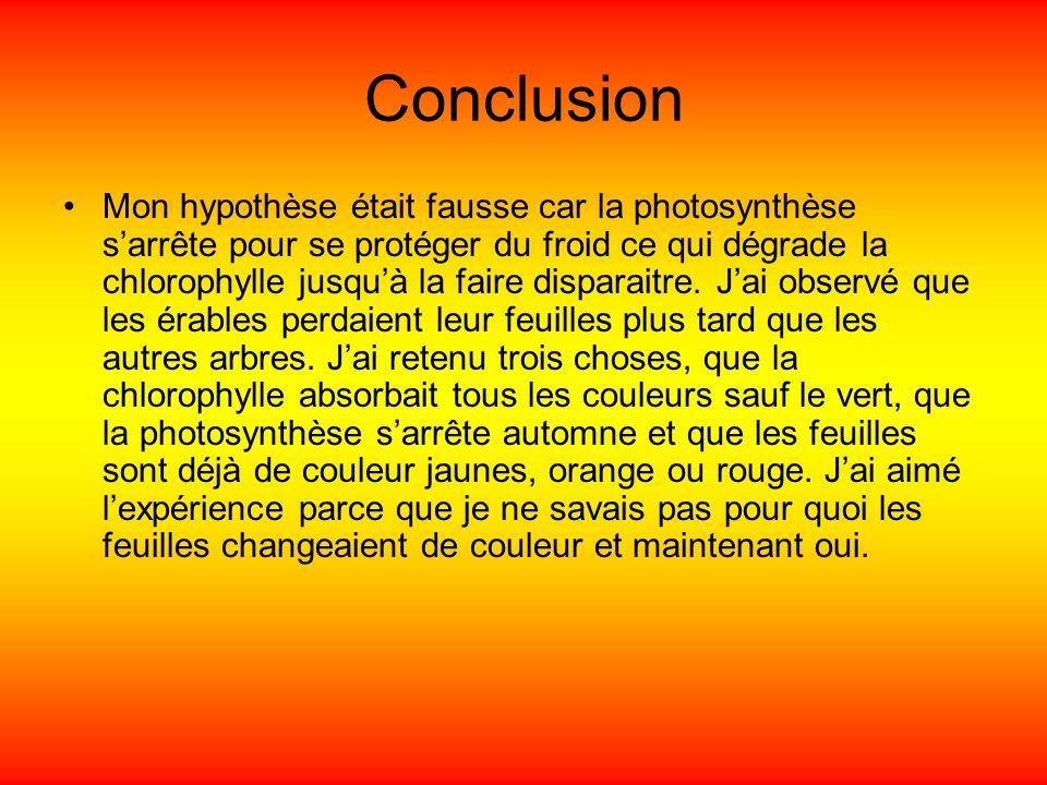 Conclusion Mon hypothèse était fausse car la photosynthèse sarrête pour se protéger du froid ce qui dégrade la chlorophylle jusquà la faire disparaitr