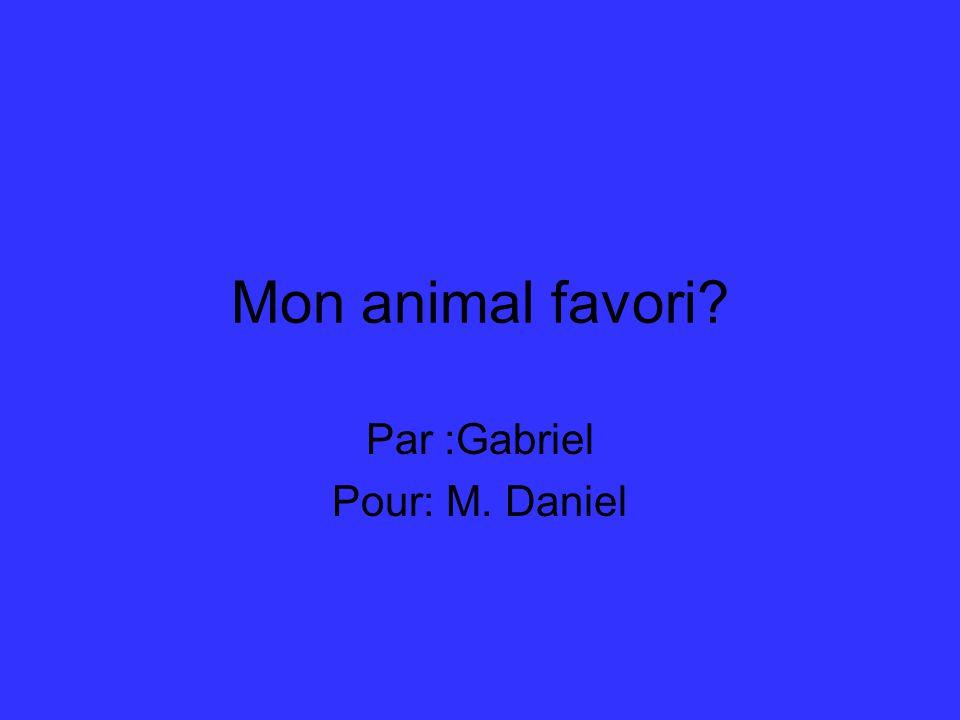 Mon animal favori Par :Gabriel Pour: M. Daniel