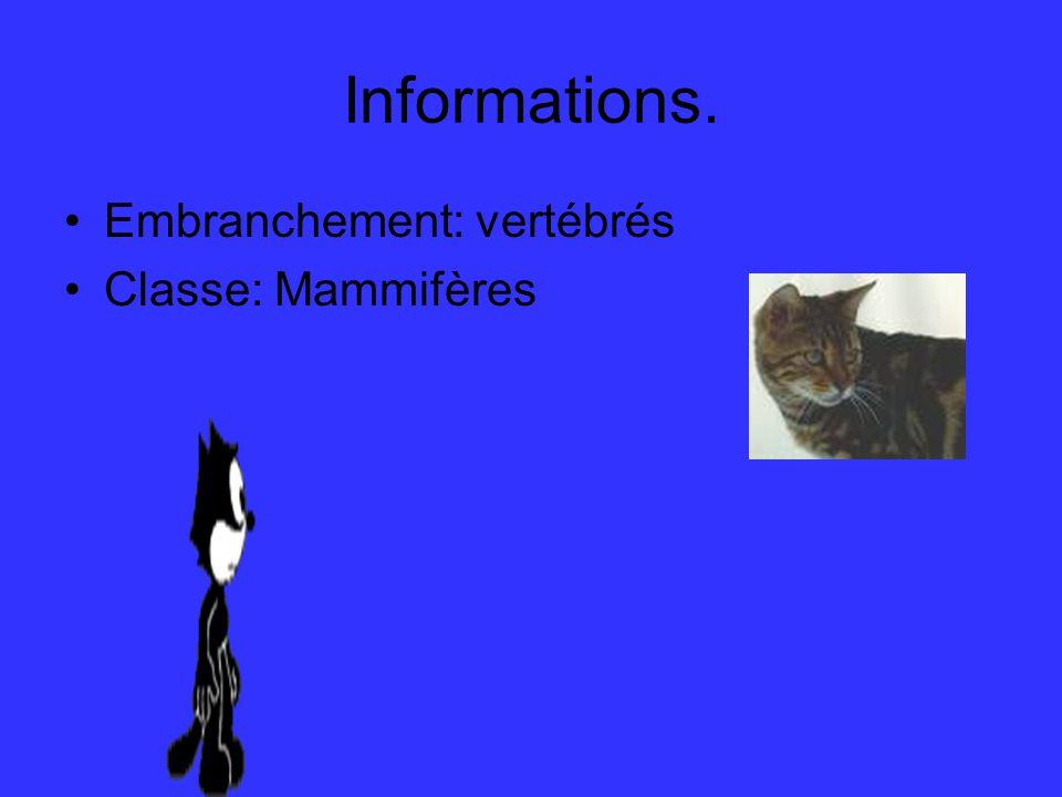 Informations. Embranchement: vertébrés Classe: Mammifères