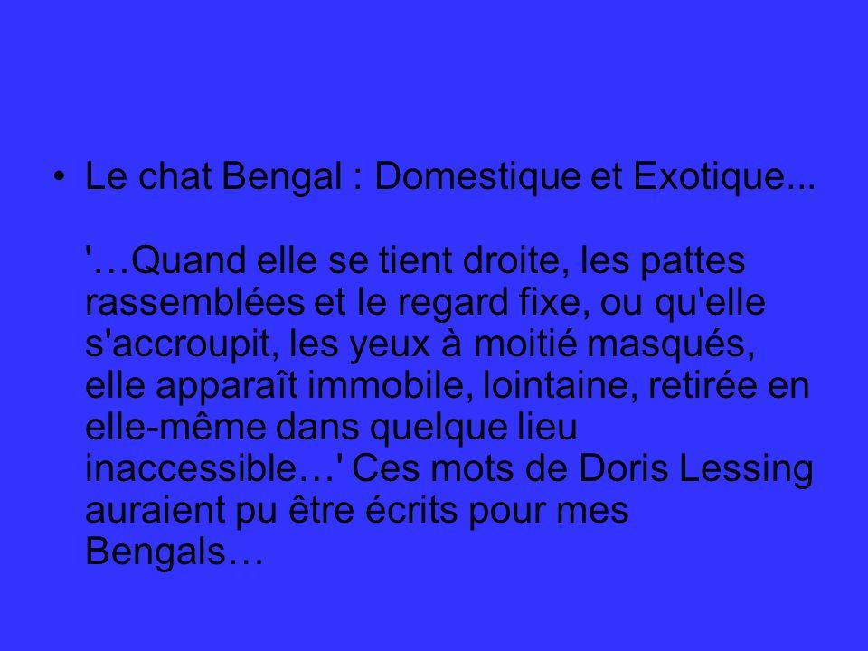 Le chat Bengal : Domestique et Exotique...