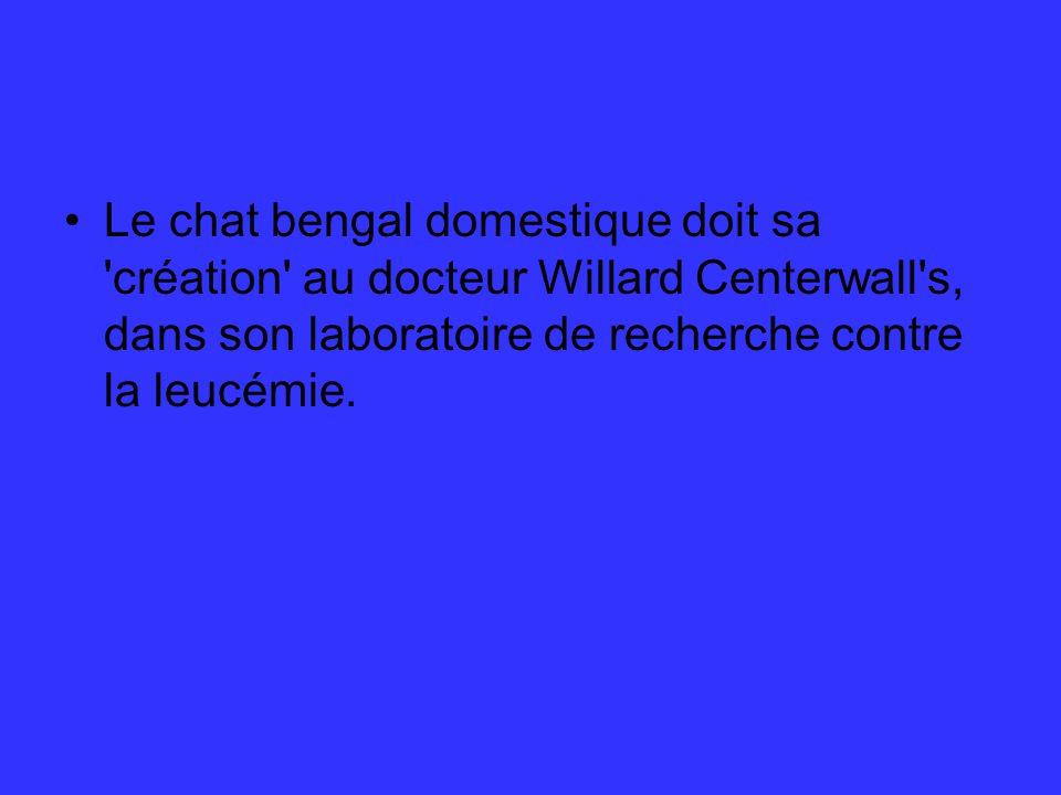 Le chat bengal domestique doit sa création au docteur Willard Centerwall s, dans son laboratoire de recherche contre la leucémie.