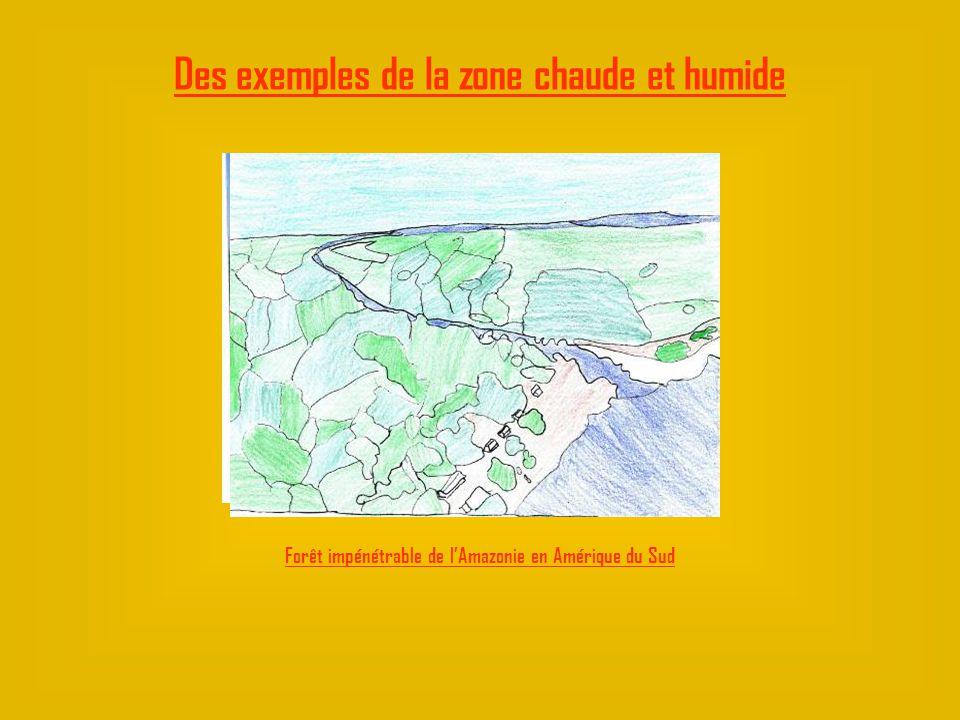 Des exemples de la zone chaude et humide Forêt impénétrable de lAmazonie en Amérique du Sud
