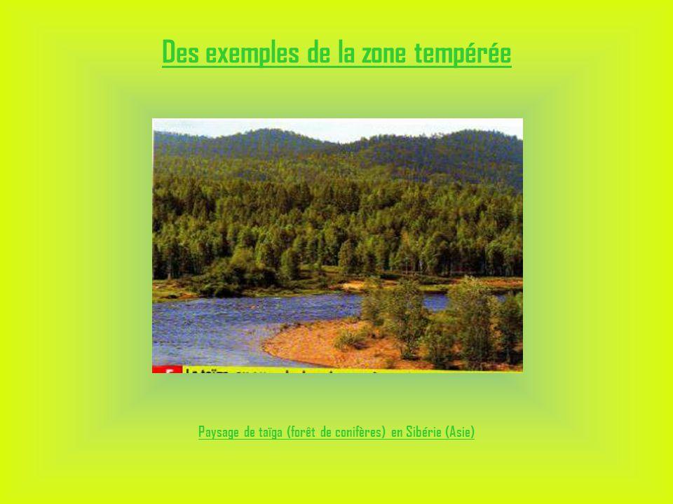 Des exemples de la zone tempérée Paysage de taïga (forêt de conifères) en Sibérie (Asie)