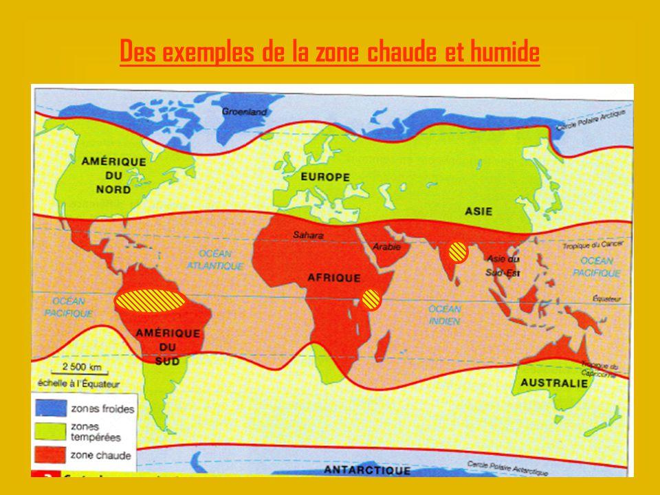 Des phoques sur la banquise en Arctique