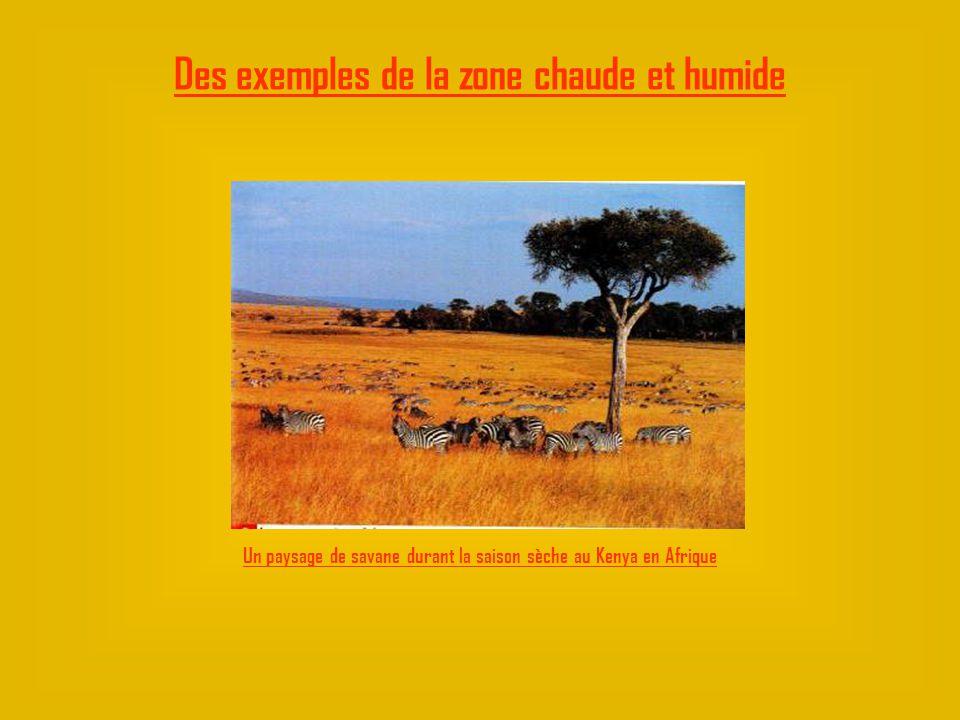 Un paysage de savane durant la saison sèche au Kenya en Afrique