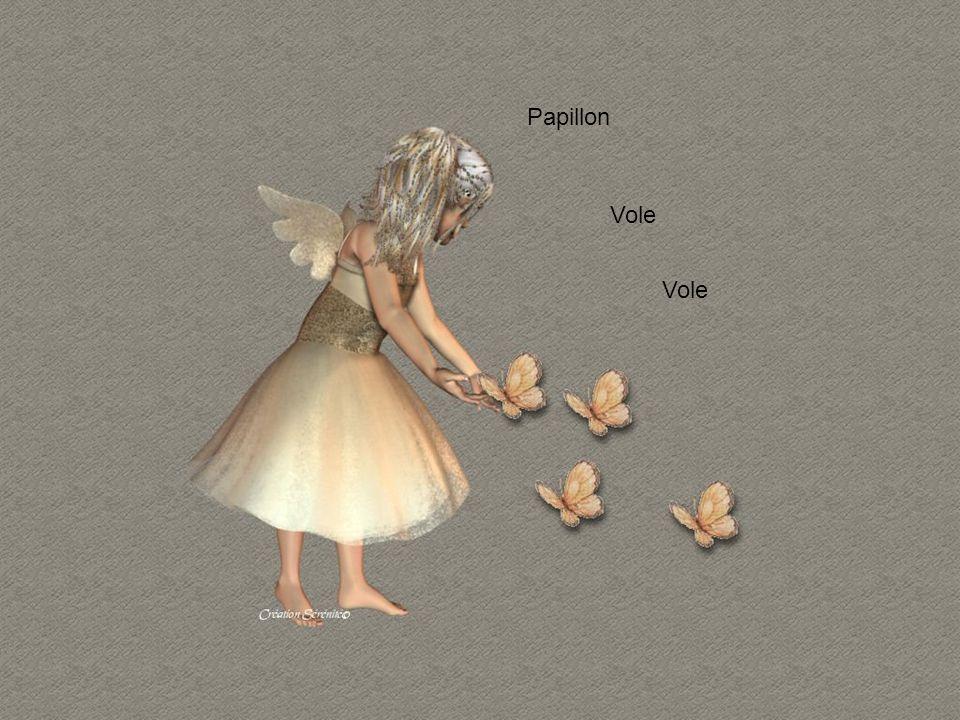 Papillon Vole Vole