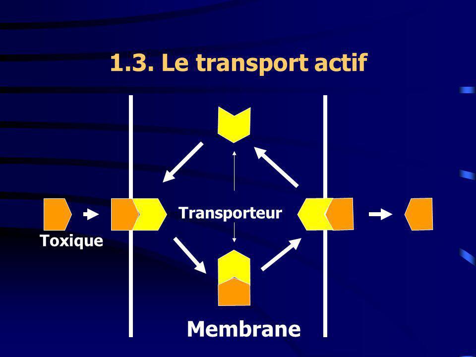 1.3. Le transport actif Toxique Transporteur Membrane