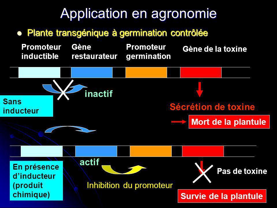 Application en agronomie Plante transgénique à germination contrôlée Plante transgénique à germination contrôlée Promoteur inductible Gène restaurateu