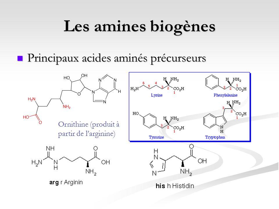 Les amines biogènes Principaux acides aminés précurseurs Principaux acides aminés précurseurs Ornithine (produit à partir de larginine)