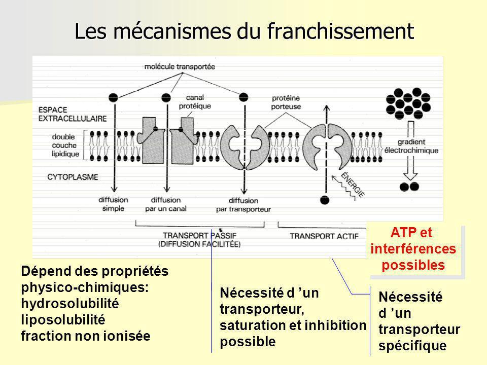 Les mécanismes du franchissement Nécessité d un transporteur, saturation et inhibition possible Nécessité d un transporteur spécifique ATP et interférences possibles ATP et interférences possibles Dépend des propriétés physico-chimiques: hydrosolubilité liposolubilité fraction non ionisée