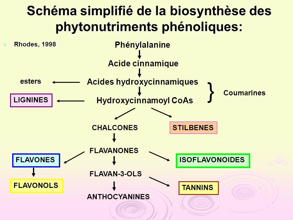 Rhodes, 1998 Rhodes, 1998 Phénylalanine Acide cinnamique Acides hydroxycinnamiques Hydroxycinnamoyl CoAs Schéma simplifié de la biosynthèse des phyton