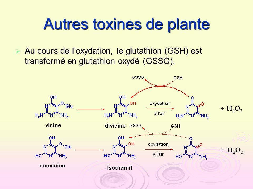 Autres toxines de plante Au cours de loxydation, le glutathion (GSH) est transformé en glutathion oxydé (GSSG). Au cours de loxydation, le glutathion