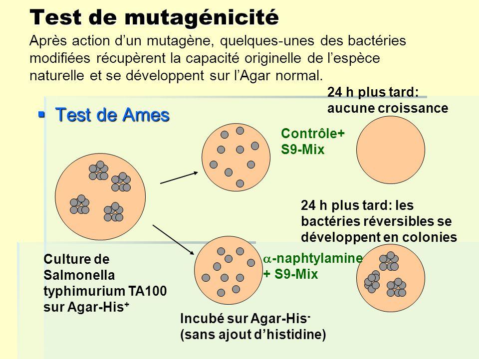 Test de mutagénicité Test de Ames Test de Ames Culture de Salmonella typhimurium TA100 sur Agar-His + Incubé sur Agar-His - (sans ajout dhistidine) 24 h plus tard: aucune croissance 24 h plus tard: les bactéries réversibles se développent en colonies Contrôle+ S9-Mix -naphtylamine + S9-Mix Après action dun mutagène, quelques-unes des bactéries modifiées récupèrent la capacité originelle de lespèce naturelle et se développent sur lAgar normal.