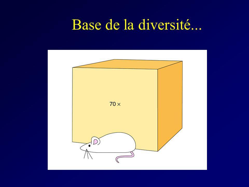 Base de la diversité...