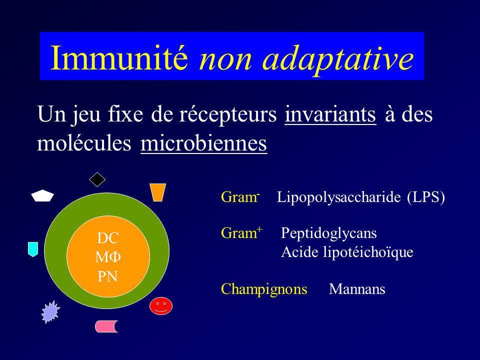 DC M PN Immunité non adaptative Un jeu fixe de récepteurs invariants à des molécules microbiennes Gram - Lipopolysaccharide (LPS) Gram + Peptidoglycan