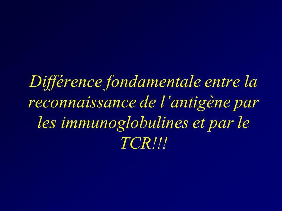 Différence fondamentale entre la reconnaissance de lantigène par les immunoglobulines et par le TCR!!!