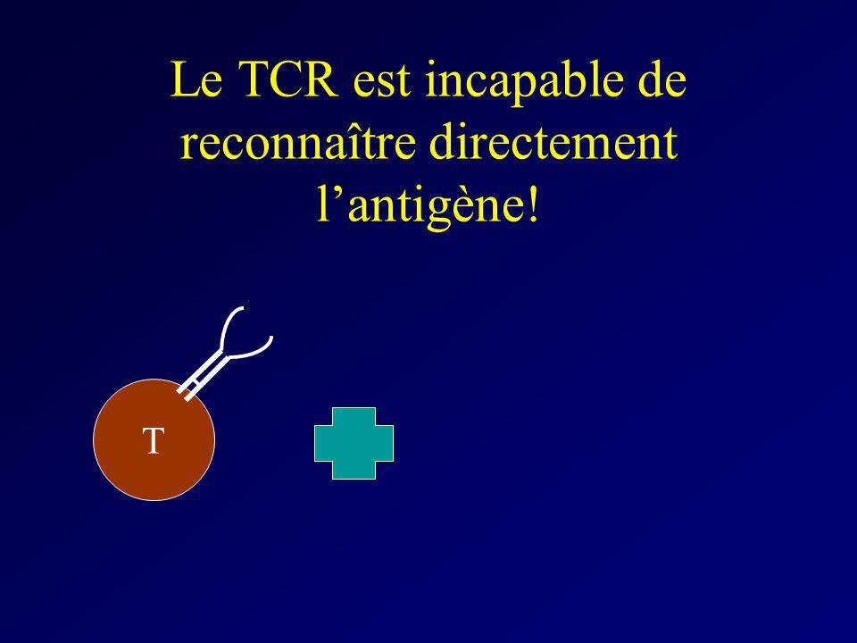 Le TCR est incapable de reconnaître directement lantigène! T