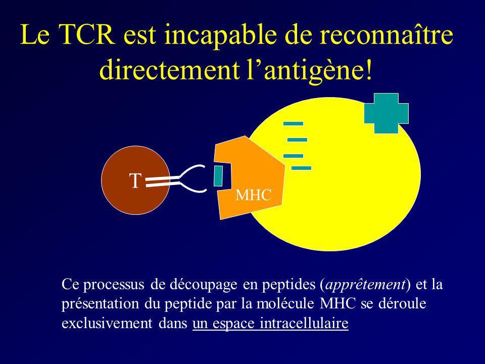 Le TCR est incapable de reconnaître directement lantigène! T Ce processus de découpage en peptides (apprêtement) et la présentation du peptide par la