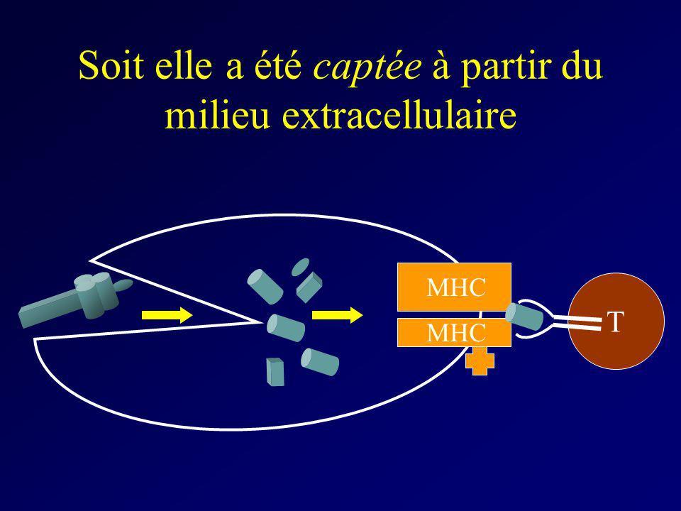 Soit elle a été captée à partir du milieu extracellulaire MHC T