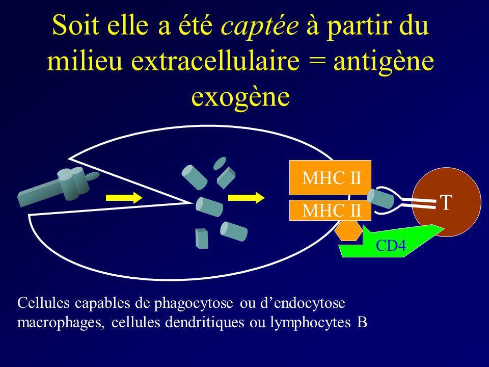 Soit elle a été captée à partir du milieu extracellulaire = antigène exogène T Cellules capables de phagocytose ou dendocytose macrophages, cellules d