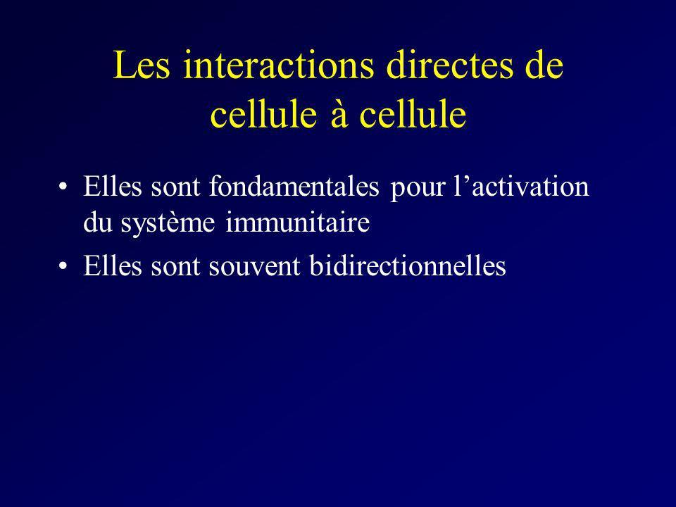 Les interactions directes de cellule à cellule Elles sont fondamentales pour lactivation du système immunitaire Elles sont souvent bidirectionnelles