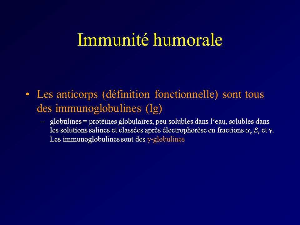 Immunité humorale Les anticorps (définition fonctionnelle) sont tous des immunoglobulines (Ig) –globulines = protéines globulaires, peu solubles dans