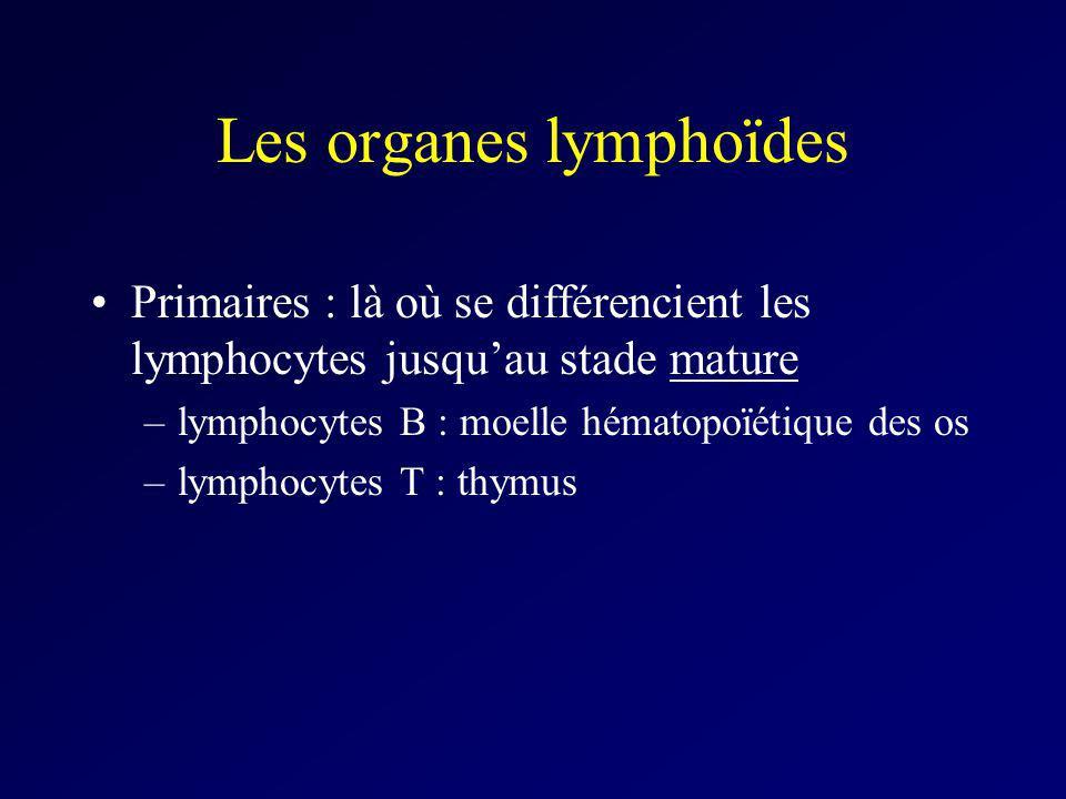 Les organes lymphoïdes Primaires : là où se différencient les lymphocytes jusquau stade mature –lymphocytes B : moelle hématopoïétique des os –lymphoc
