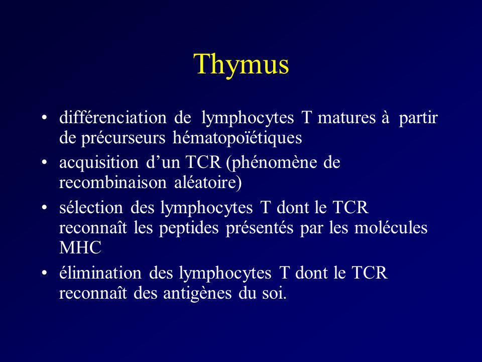 Thymus différenciation de lymphocytes T matures à partir de précurseurs hématopoïétiques acquisition dun TCR (phénomène de recombinaison aléatoire) sé