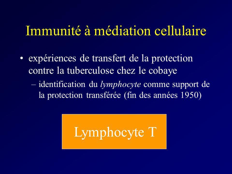 Immunité à médiation cellulaire expériences de transfert de la protection contre la tuberculose chez le cobaye –identification du lymphocyte comme sup