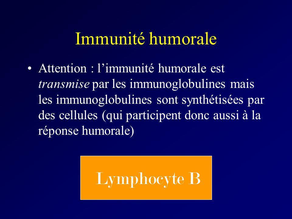 Immunité humorale Attention : limmunité humorale est transmise par les immunoglobulines mais les immunoglobulines sont synthétisées par des cellules (