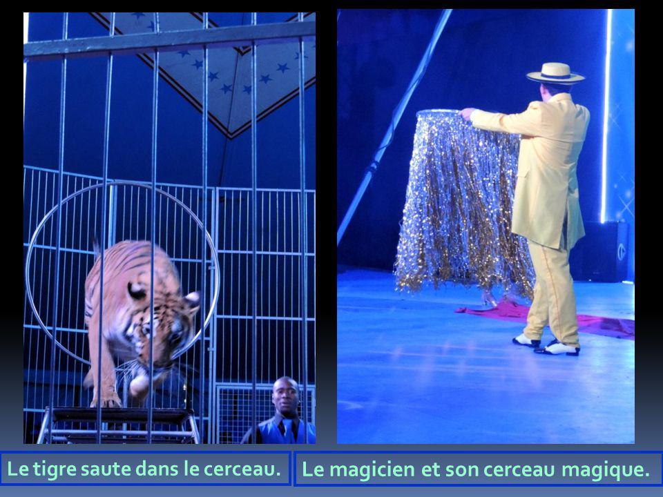 Le tigre saute dans le cerceau. Le magicien et son cerceau magique.