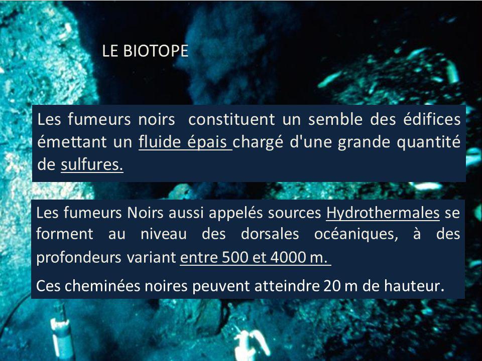 Formation du biotope -Leau salée du fond des océans sinfiltre dans les failles et fissures qui émaillent le rift.