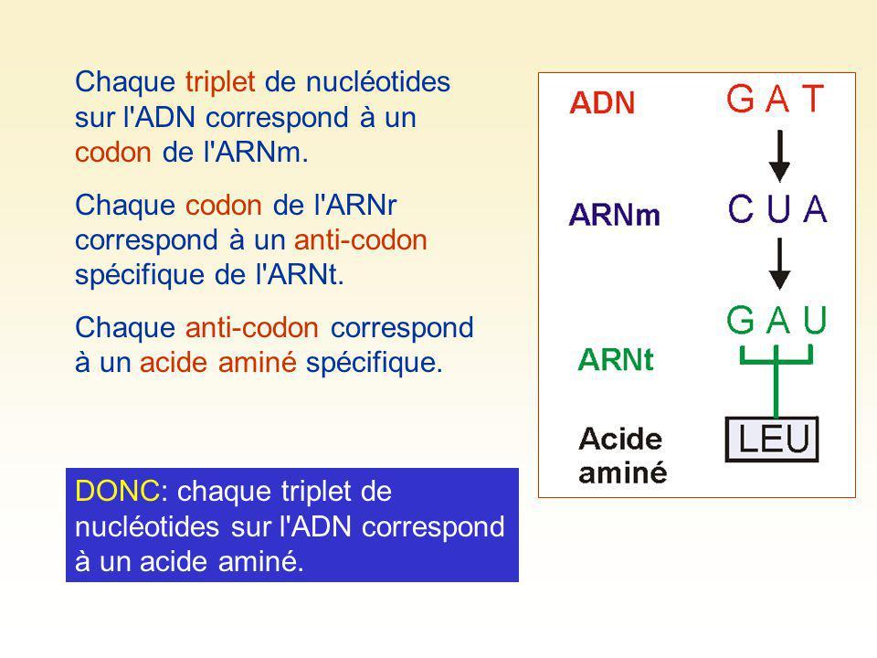 Chaque triplet de nucléotides sur l'ADN correspond à un codon de l'ARNm. Chaque codon de l'ARNr correspond à un anti-codon spécifique de l'ARNt. Chaqu