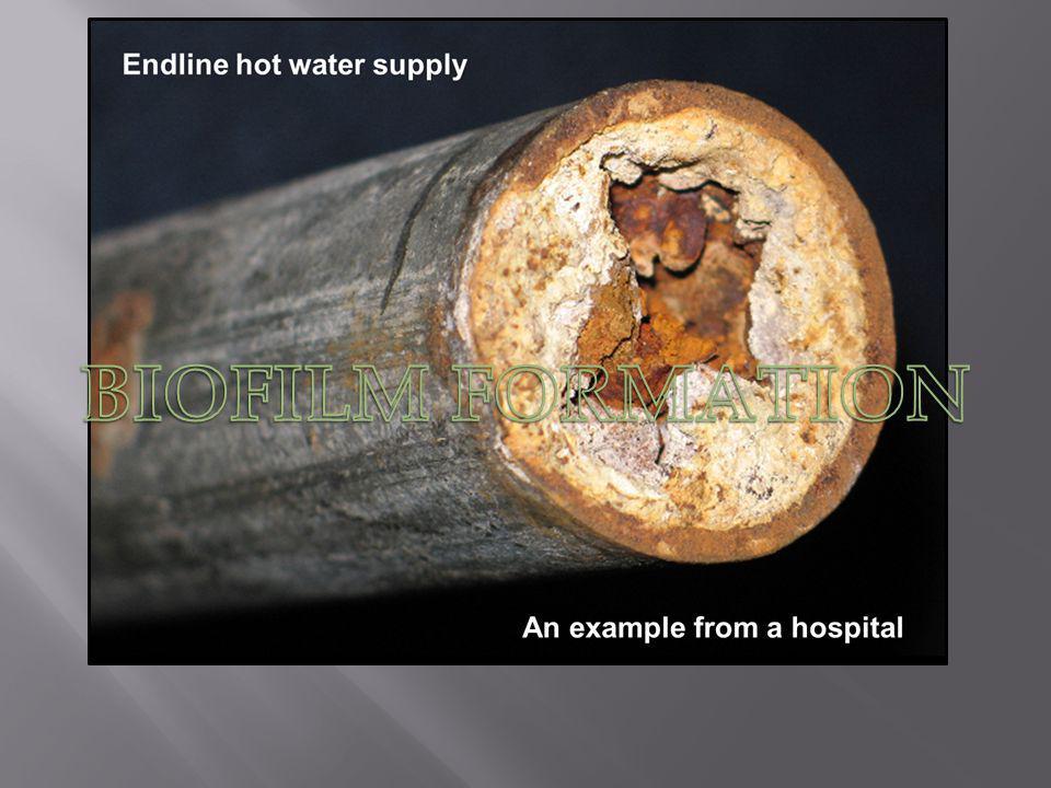 Corrosion du tuyau a cause dune Hyperchlorination