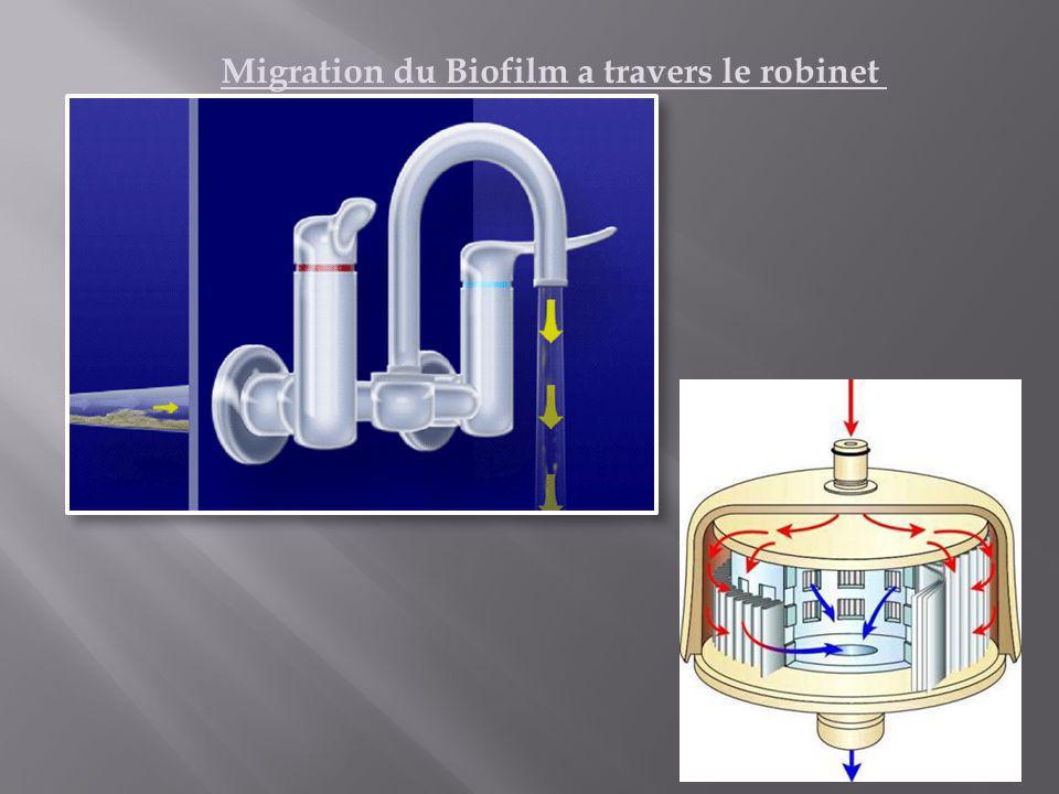 Migration du Biofilm a travers le robinet