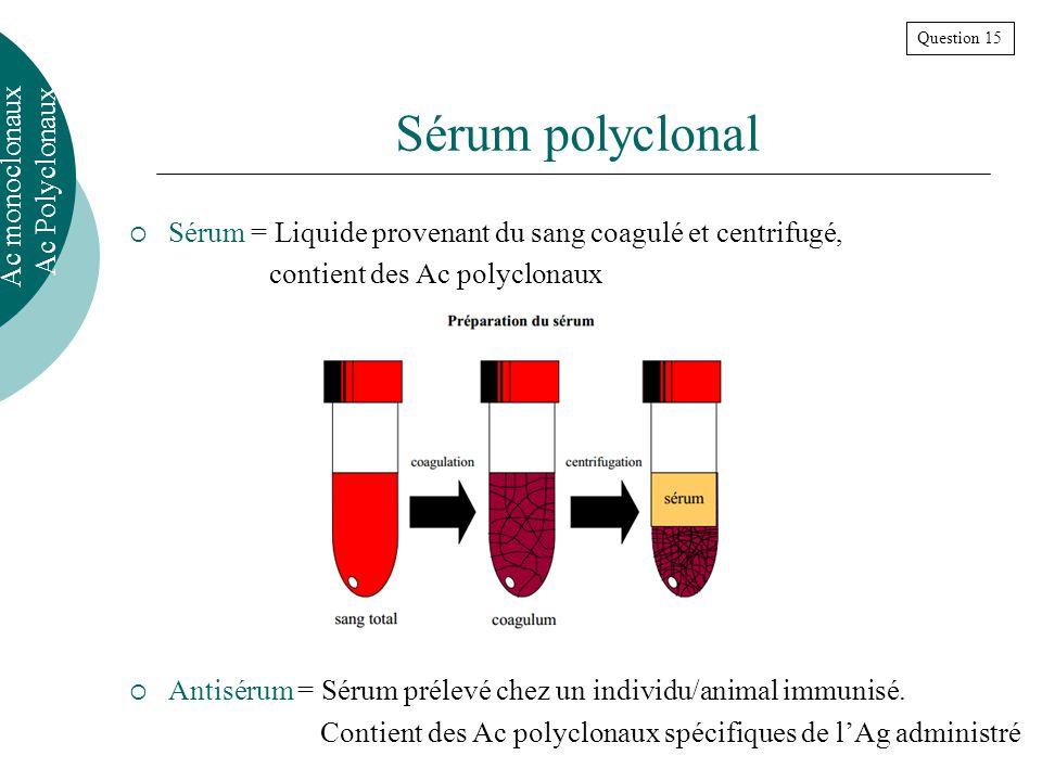 Sérum polyclonal Sérum = Liquide provenant du sang coagulé et centrifugé, contient des Ac polyclonaux Antisérum = Sérum prélevé chez un individu/animal immunisé.