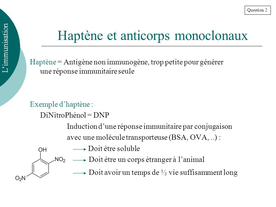 Haptène et anticorps monoclonaux Haptène = Antigène non immunogène, trop petite pour générer une réponse immunitaire seule Exemple dhaptène : DiNitroPhénol = DNP Induction dune réponse immunitaire par conjugaison avec une molécule transporteuse (BSA, OVA,..) : Doit être soluble Doit être un corps étranger à lanimal Doit avoir un temps de ½ vie suffisamment long Limmunisation Question 2