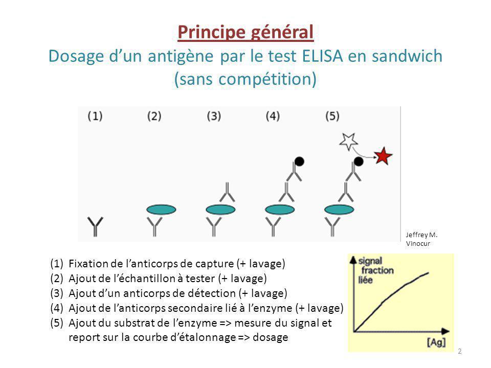 Principe général Dosage dun antigène par le test ELISA en sandwich (sans compétition) (1)Fixation de lanticorps de capture (+ lavage) (2)Ajout de léch