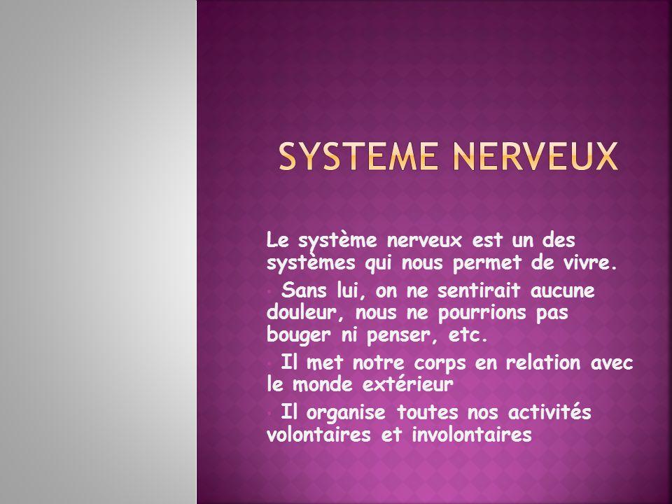 système nerveux système nerveux central Encéphale (cerveau, cervelet et bulbe rachidien) Moelle épinière système nerveux périphérique Nerfs (rachidiens et crâniens) Système nerveux autonome