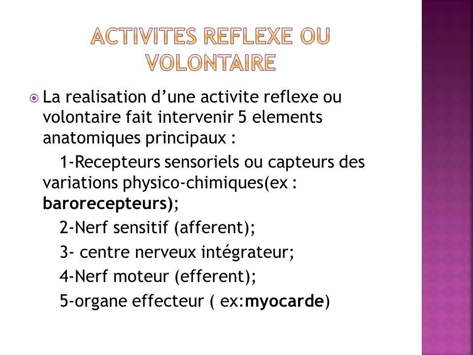 La realisation dune activite reflexe ou volontaire fait intervenir 5 elements anatomiques principaux : 1-Recepteurs sensoriels ou capteurs des variati