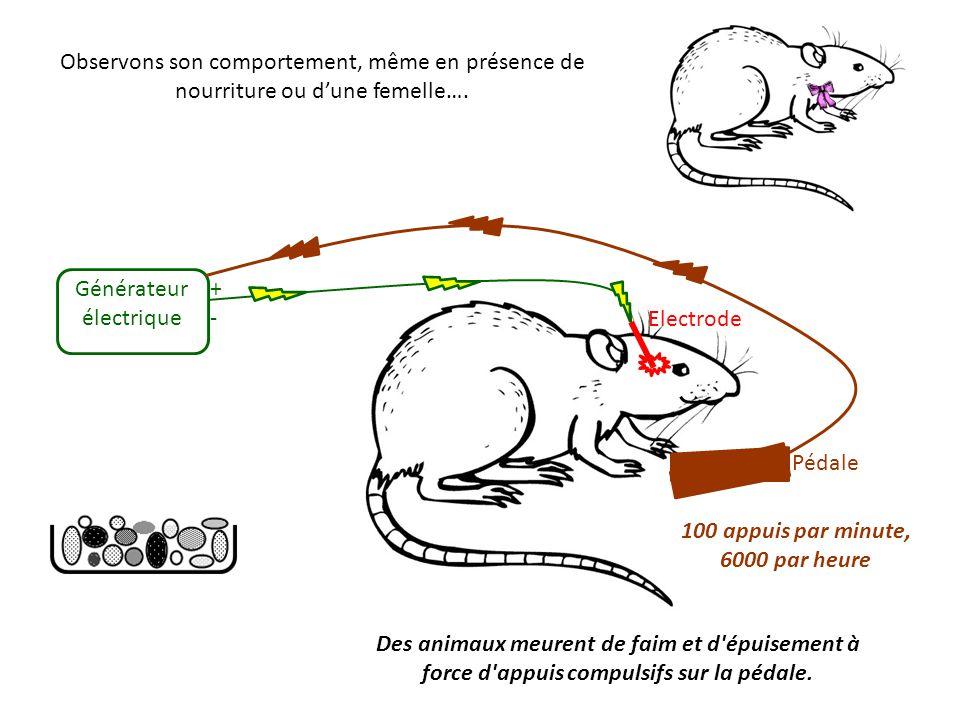 Données neurophysiologiques chez l homme (1964, 1972, Heath) Des stimulations électriques de différentes régions du cerveau, en particulier de la région septale entraînaient, chez des patients, sentiment de plaisir, excitation sexuelle, orgasme, voire sentiment amoureux envers l expérimentateur !