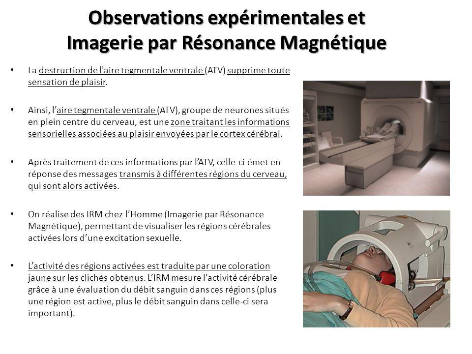 Observations expérimentales et Imagerie par Résonance Magnétique Document : Coupe frontale des régions cérébrales activées lors de lexcitation sexuelle chez un patient Les zones a, b, c et d correspondent à différentes régions du cerveau : a = gyrus cingulaire, b = tête du noyau caudé, c = claustrum, d = putamen Remarque = Deux autres régions sactivent lors de cet enregistrement (mais situées un peu plus en arrière du cerveau et donc non visibles sur cet IRM) : le noyau accumbens et le septum.